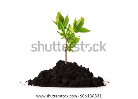 Young plant tree growing seedling in soil isolated on white background