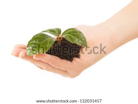 Young plant with green leaves in soil in beautiful woman hand