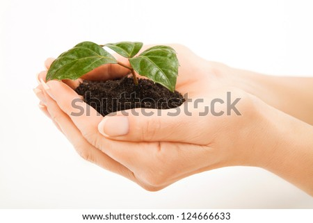 Young plant with green leaves in soil in beautiful woman hands