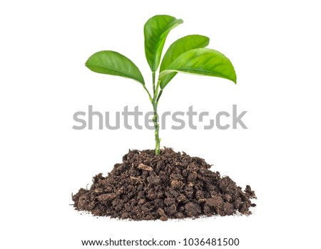Young plant with humus isolated on white background