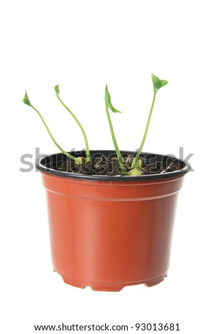 Young Plants on White Background