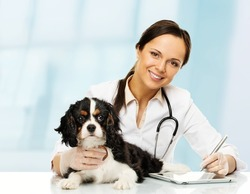 Young positive brunette veterinary woman with spaniel taking notes on tablet pc