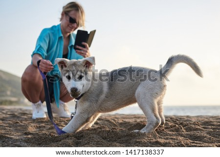 Young pretty blond woman, taking picture on her phone of her small husky puppy. Owner and the light grey dog, playing on the sandy beach at sunset.