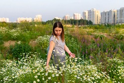 Young pretty caucasian woman walking in meadow among chamomile flowers in summer, summertime, wild chamomile, beautiful woman