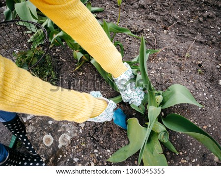 young pretty woman with yellow and glasses sweater weeding weeds #1360345355