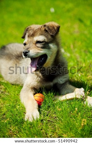 stock-photo-young-puppy-in-green-grass-51490942.jpg