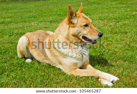 Young puppy laying down on green grass field