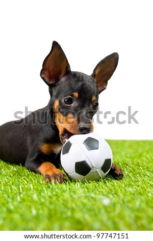 Young puppy, lies down with football, over white