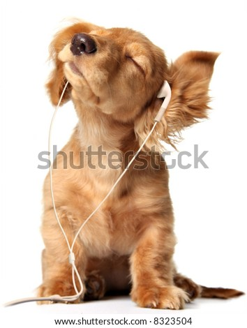 Young puppy listening to music on headphones. - stock photo