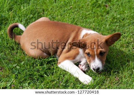 Young puppy lying in grass eyeing something off camera