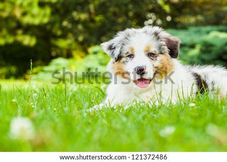 Young puppy lying on fresh green grass in public park