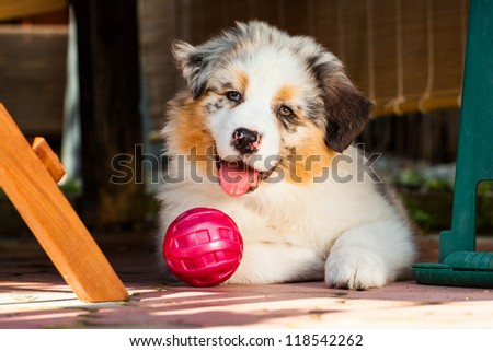 Young puppy with its ball lying on the ground in the garden
