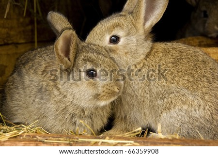 Young rabbit animal, farm and breeding
