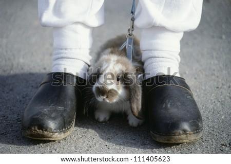 Young rabbit kept on leash