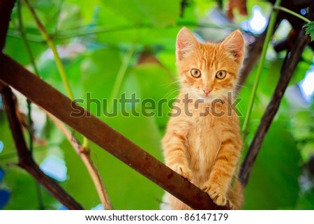 Young red cat kitten sitting on branch outdoor shot at sunny day