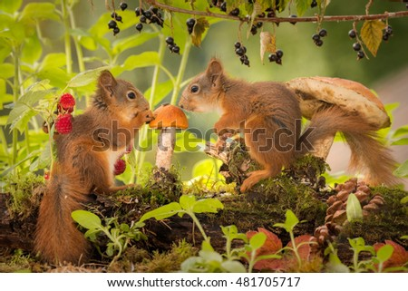 young red squirrels watching a mushroom with a seed on it with branch with raspberries and black current
