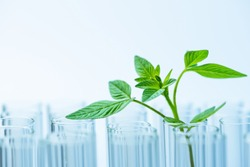 young sample plant growing in test tube , biotechnology research concept.