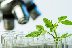 young sample plant growing in test tube with microscope background , biotechnology research concept.