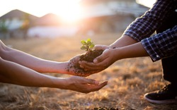 Young seedlings are ready to grow in fertile soil, Agriculture gave the young men trees to prepare for planting and reduce global warming, Save world save life and Plant a tree concept.