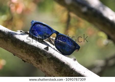 Young Shade Tree #1090787309