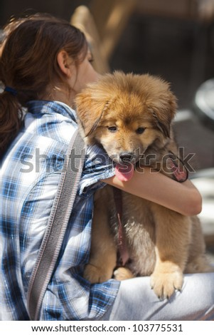 young sitting girl holds a cute Elo puppy in her arm