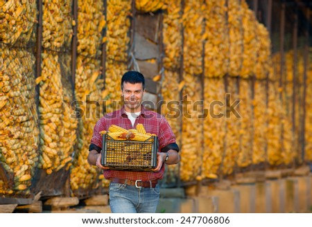 Young smiling farmer carrying crate with corn cobs on farm