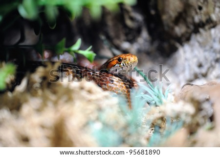 Young snake hide in the grass