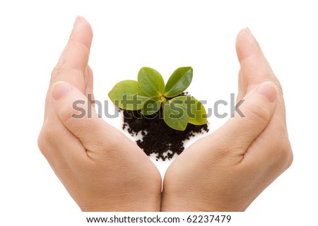 Young sprout and hands