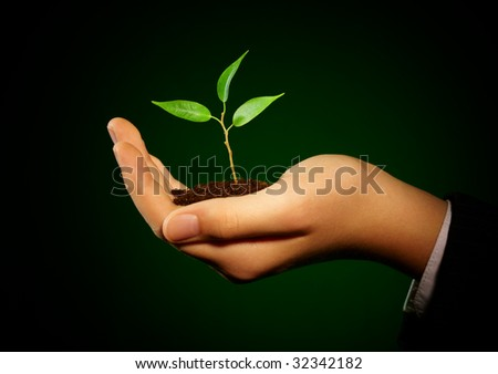 Young sprout in a hand