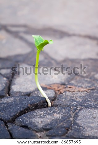 Young sprout makes the way through asphalt on city road