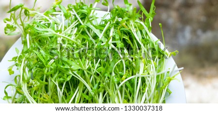 Young sprout microgreen seedling morning glory organic vegetable healthy food, Chinese morning glory