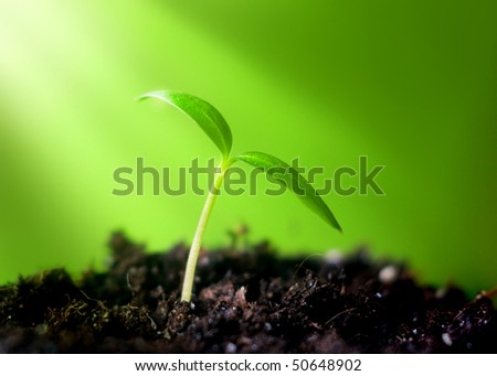 young sprout on green background in the sunlight