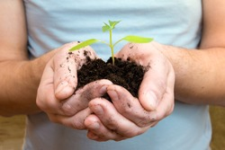 Young sprouting plant in male hands, sunlight. Beginning and care concept.
