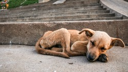 Young stray dog sleeping