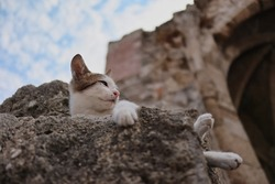 Young Stray Kitten Rests on Stone in Rhodes Greece. Greek Feral Cat Lies Down on Rock in Europe.
