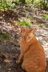 Young stray yellow cat looking over his shoulder cautiously