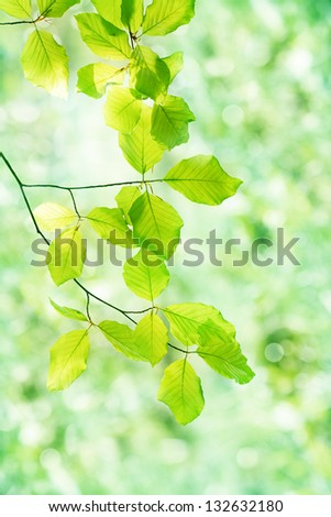 Young succulent leaves on the tree, view from below