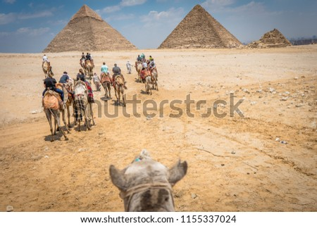 Young tourists ride camels next to The Great Pyramids in Egypt