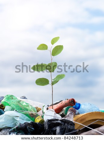Young tree at the dump