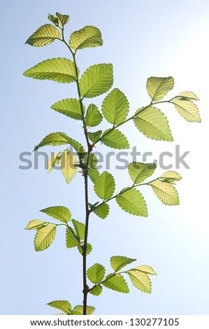 Young tree branch on sky background