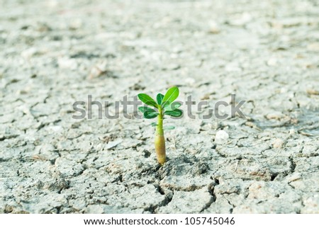 young tree growing around cracked soil