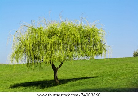 young tree growing on the green meadow