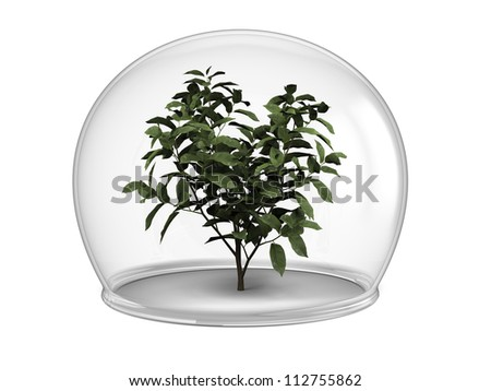 Young tree inside glass bowl, concept of environmental protection and conservation, isolated on white background