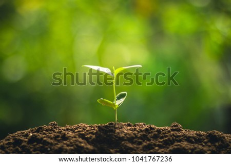 Young tree plant a tree Watering a tree in nature light and background - Shutterstock ID 1041767236