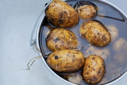 young unpeeled potatoes lying in water in an aluminum pot
