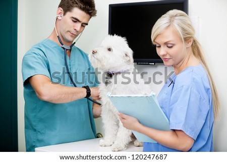 Young vet with tech measuring the heart rate of a dog