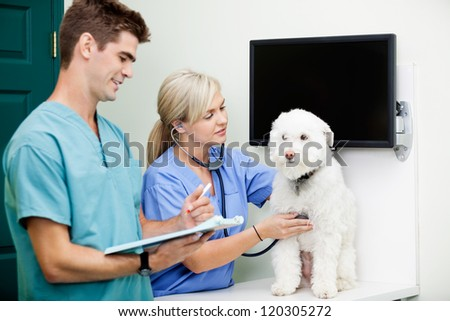 Young veterinarian doctors in scrubs examining a dog at clinic