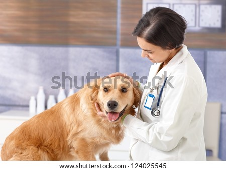 Young veterinarian examining cute golden retriever at pets' clinic.
