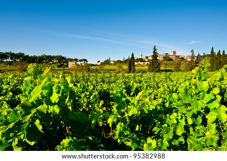 Young Vineyard in Southern France, Region Rhone-Alpes