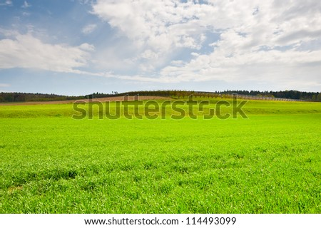 Young Vineyard on the Slopes of the Swiss Alps - stock photo